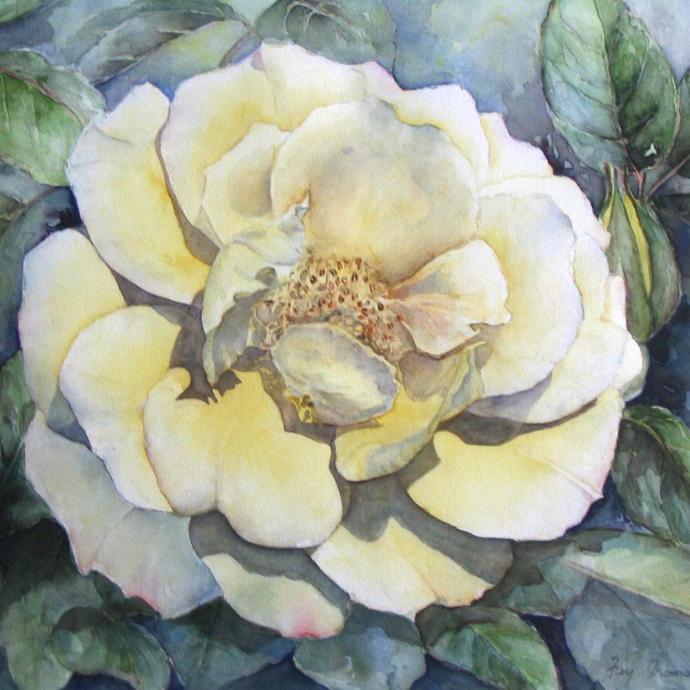 Fay-Thompson-Rose-_Goldener-Sommer_